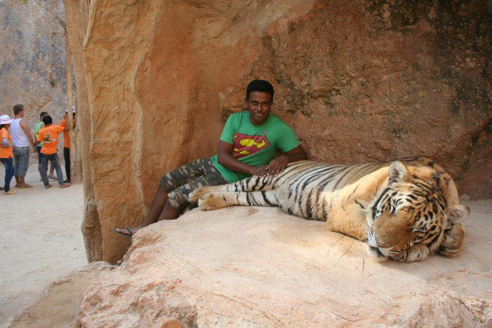 Siva gets in an enclosure with a bengal tiger.